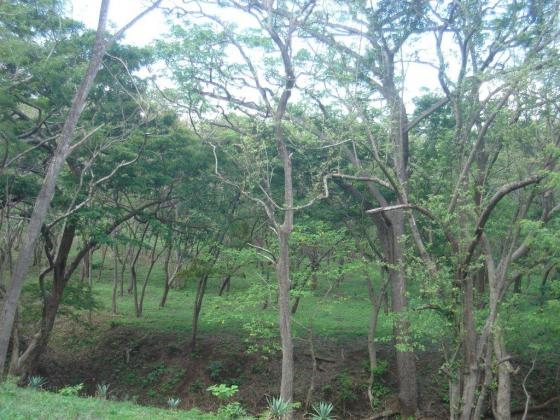 Treed Lot Near Surfing Beaches
